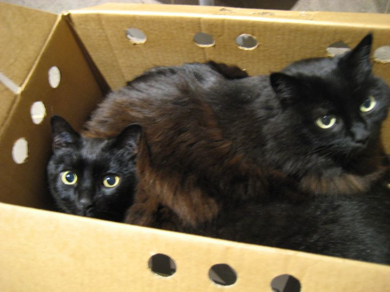 Eli&Mona in a box